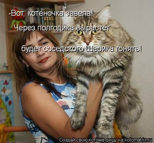 Котоматрица: -Вот, котеночка завела! Через полгодика вырастет  будет соседского Шарика гонять!