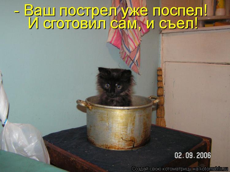 Котоматрица - - Ваш пострел уже поспел! И сготовил сам, и съел!