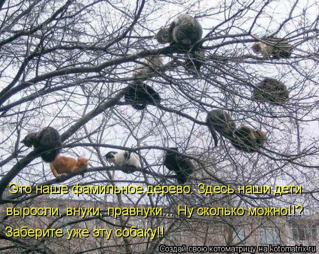 Котоматрица: Это наше фамильное дерево. Здесь наши дети выросли, внуки, правнуки... Ну сколько можно!!? Заберите уже эту собаку!!