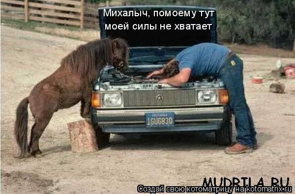 Котоматрица: Михалыч, помоему тут моей силы не хватает