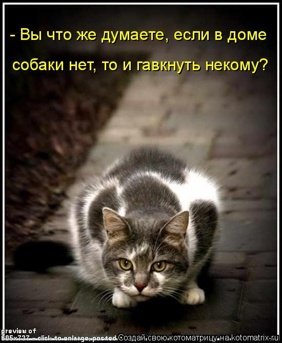 Котоматрица - - Вы что же думаете, если в доме  собаки нет, то и гавкнуть некому?