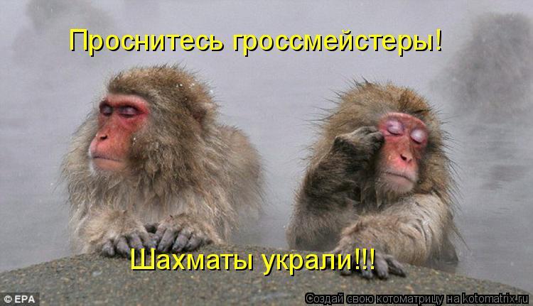 Котоматрица: Проснитесь гроссмейстеры! Шахматы украли!!!