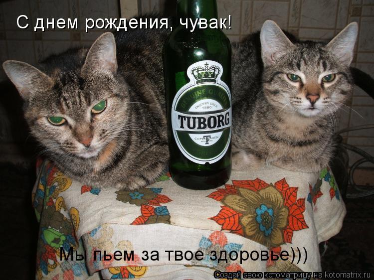 Котоматрица: С днем рождения, чувак! Мы пьем за твое здоровье)))