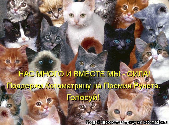 Котоматрица: НАС МНОГО И ВМЕСТЕ МЫ - СИЛА!  Поддержи Котоматрицу на Премии Рунета.  Голосуй!