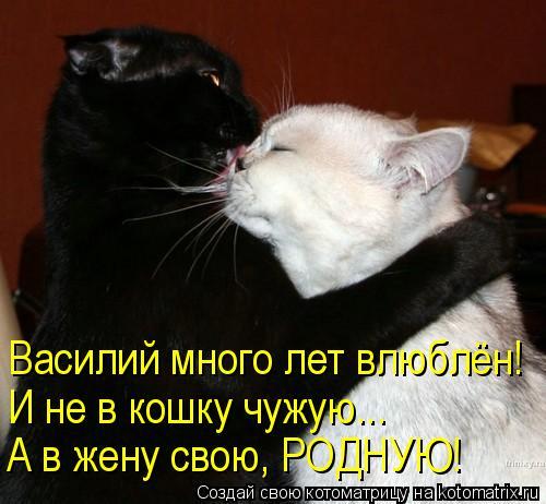 Котоматрица: Василий много лет влюблён! И не в кошку чужую... А в жену свою, РОДНУЮ!