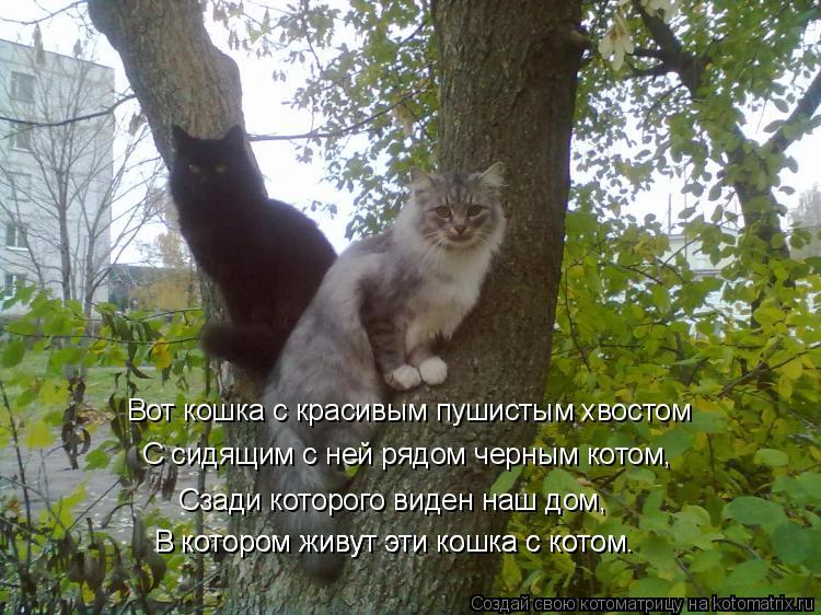 Котоматрица: Сзади которого виден наш дом, В котором живут эти кошка с котом. В котором живут эти кошка с котом. Вот кошка с красивым пушистым хвостом С си