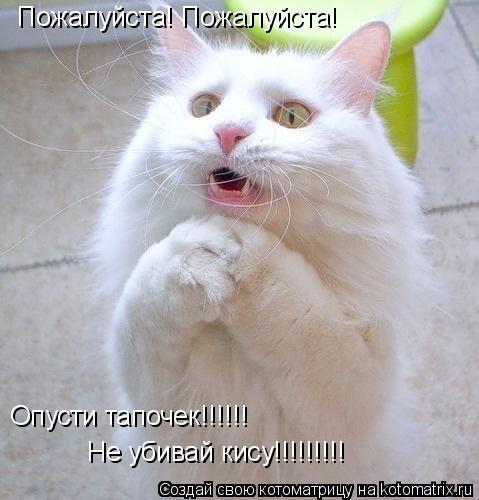 Котоматрица: Пожалуйста! Пожалуйста! Опусти тапочек!!!!!! Не убивай кису!!!!!!!!!