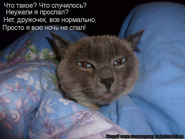 Котоматрица: Что такое? Что случилось? Неужели я проспал? Нет, дружочек, все нормально, Просто я всю ночь не спал!