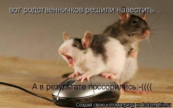 Котоматрица: вот родственничков решили навестить... А в результате поссорились:-((((