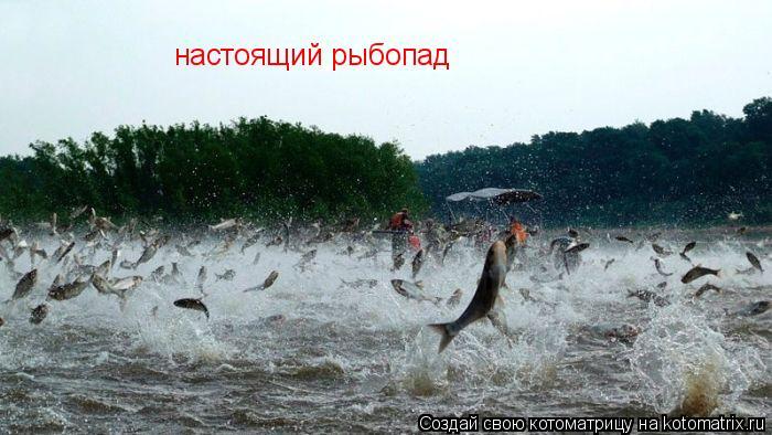 Котоматрица: настоящий рыбопад