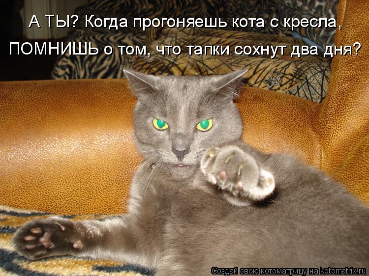 Котоматрица: А ТЫ? Когда прогоняешь кота с кресла,  ПОМНИШЬ о том, что тапки сохнут два дня?