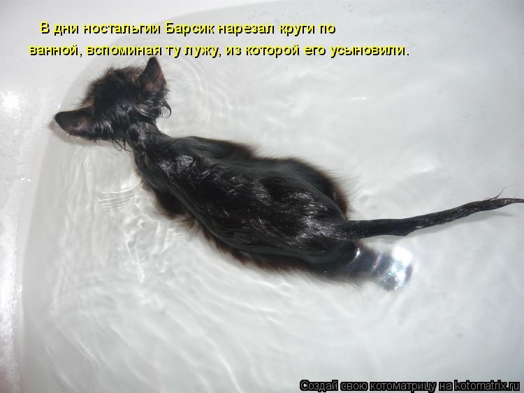 Котоматрица: В дни ностальгии Барсик нарезал круги по  ванной, вспоминая ту лужу, из которой его усыновили.