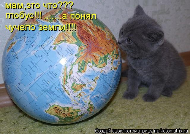 Котоматрица: мам,это что??? глобус!!! .......а понял чучело земли!!!!