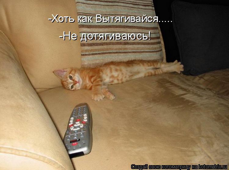 Котоматрица: -Хоть как Вытягивайся..... -Не дотягиваюсь!