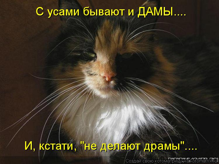 """Котоматрица: С усами бывают и ДАМЫ.... И, кстати, """"не делают драмы""""...."""