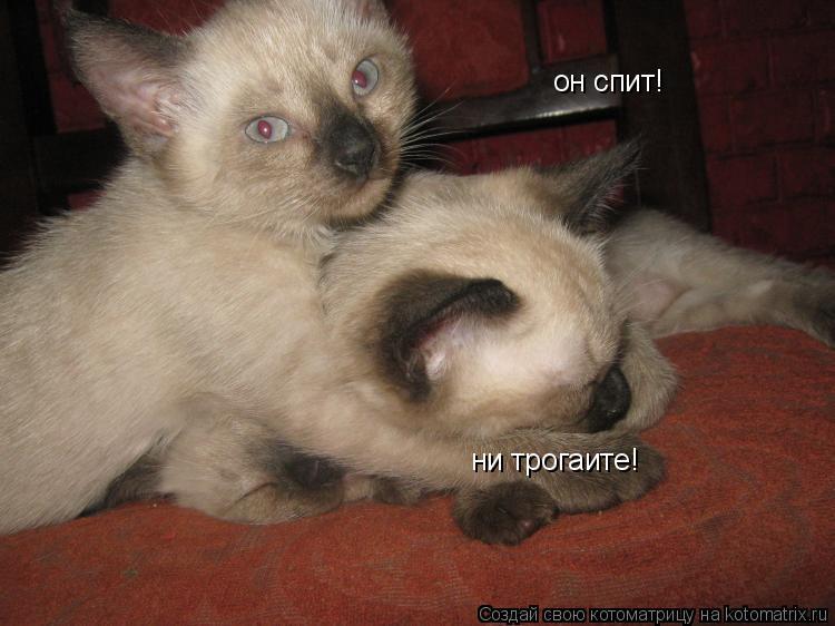 Котоматрица: он спит! ни трогаите!