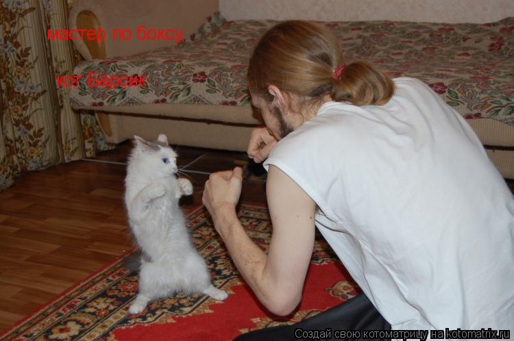 Котоматрица: мастер по боксу, кот Барсик