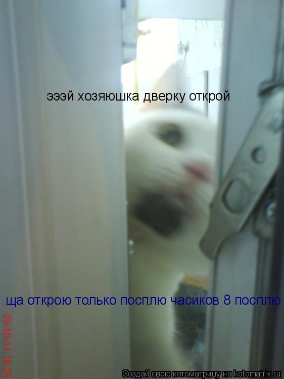 Котоматрица: эээй хозяюшка дверку открой ща открою только посплю часиков 8 посплю