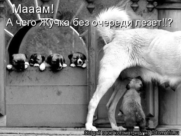 Котоматрица: Мааам!  Мааам!   А чего Жучка без очереди лезет!!?