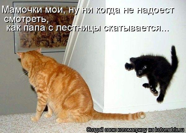 Котоматрица: Мамочки мои, ну ни когда не надоест смотреть,  как папа с лестницы скатывается...