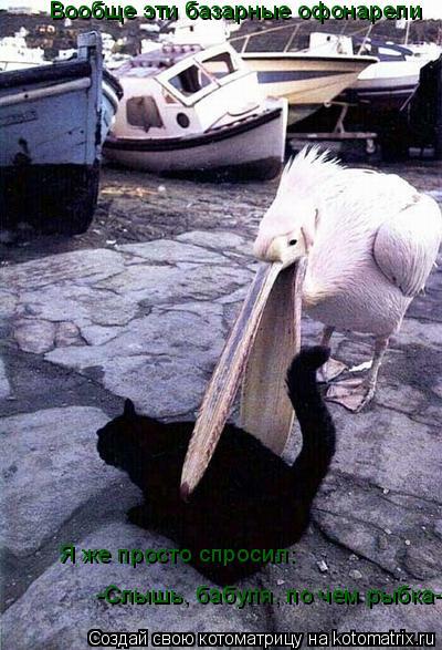 Котоматрица: Вообще эти базарные офонарели Я же просто спросил: -Слышь, бабуля, по чем рыбка-