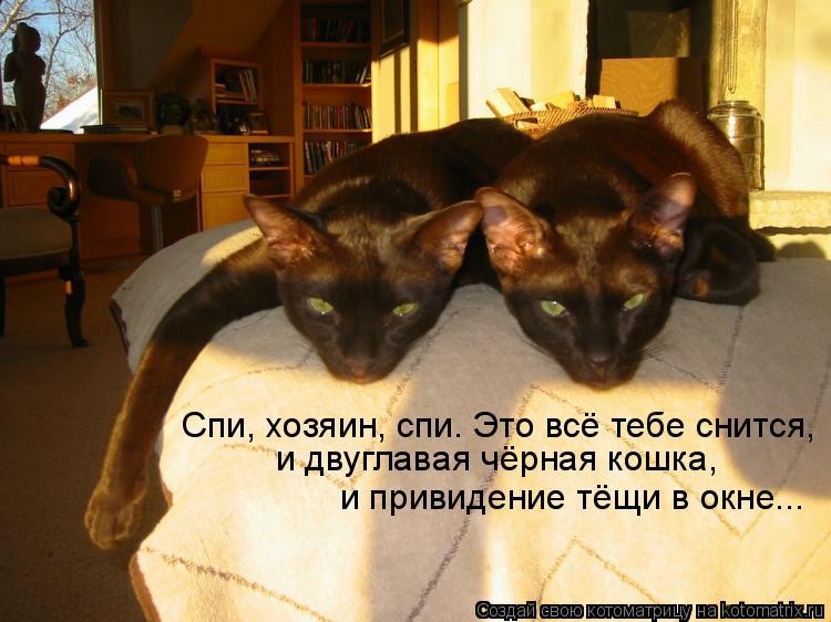 Котоматрица: Спи, хозяин, спи. Это всё тебе снится, и двуглавая чёрная кошка,  и привидение тёщи в окне...