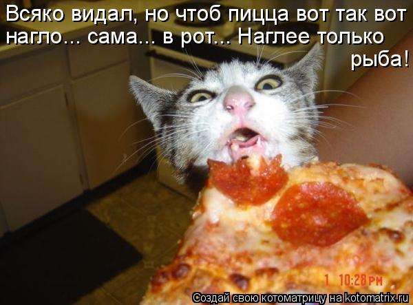 Котоматрица - Всяко видал, но чтоб пицца вот так вот нагло... сама... в рот... Нагле