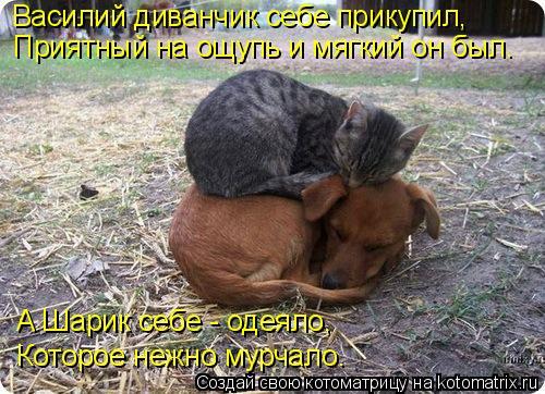 Котоматрица - Василий диванчик себе прикупил, Приятный на ощупь и мягкий он был. А Ш