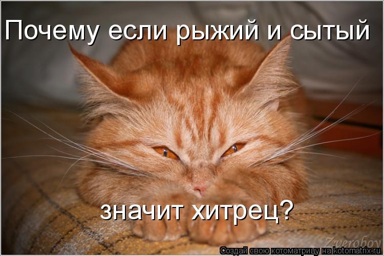 Котоматрица: Почему если рыжий и сытый значит хитрец?