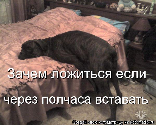 Котоматрица: Зачем ложиться если через полчаса вставать