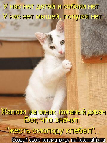 """Котоматрица: У нас нет детей и собаки нет. У нас нет мышей, попугая нет. Жалюзи  на окнах, кожаный диван. Вот, что значит  """"жесть смолоду хлебал""""..."""