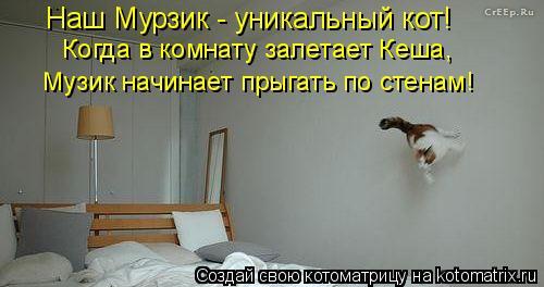 Котоматрица: Наш Мурзик - уникальный кот!   Когда в комнату залетает Кеша, Музик начинает прыгать по стенам!