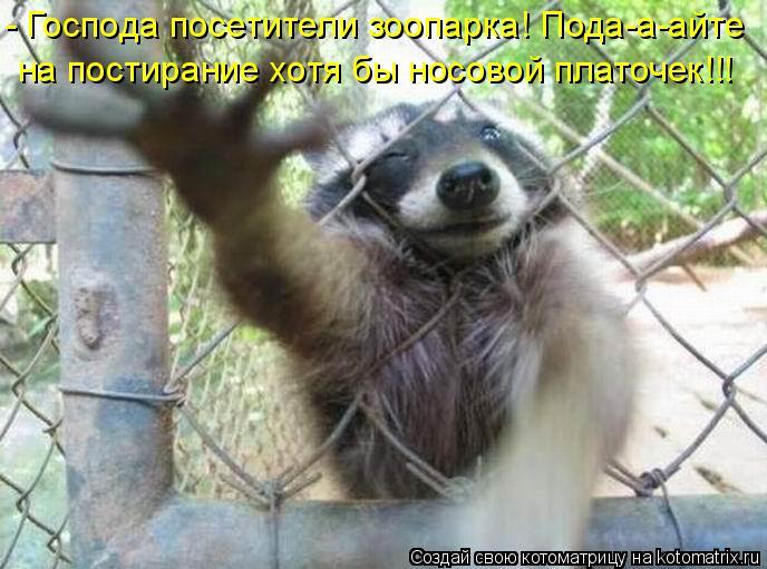 Котоматрица - - Господа посетители зоопарка! Пода-а-айте на постирание хотя бы носов