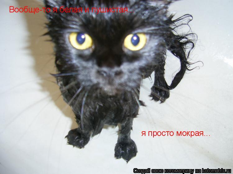картинки облезлый кот