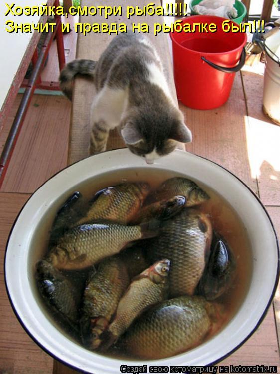 Котоматрица: Хозяйка,смотри рыба!!!!! Значит и правда на рыбалке был!!!