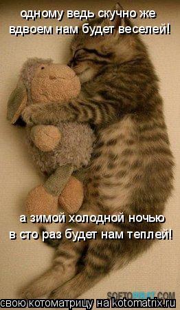 Котоматрица: одному ведь скучно же вдвоем нам будет веселей! а зимой холодной ночью в сто раз будет нам теплей!