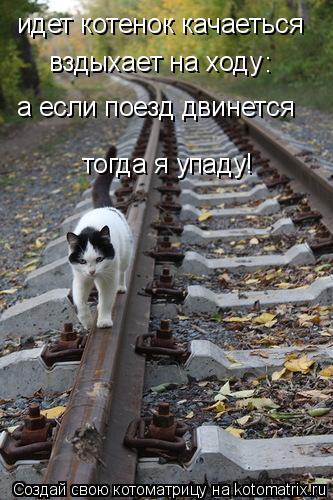 Котоматрица: идет котенок качаеться вздыхает на ходу а если поезд двинется тогда я упаду! :