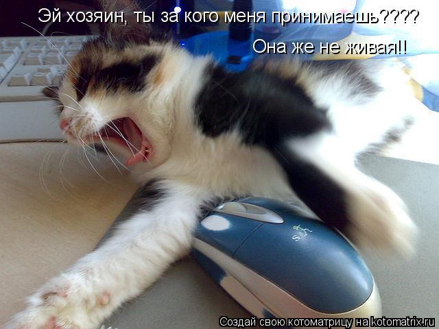 Котоматрица: Эй хозяин, ты за кого меня принимаешь???? Она же не живая!!