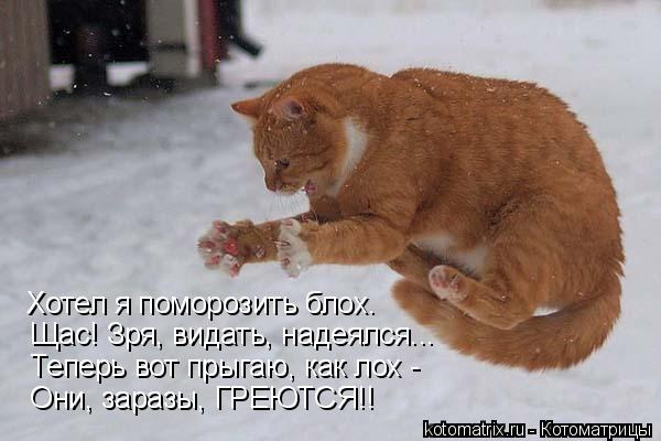 Котоматрица: Хотел я поморозить блох.  Щас! Зря, видать, надеялся...  Теперь вот прыгаю, как лох -  Они, заразы, ГРЕЮТСЯ!!