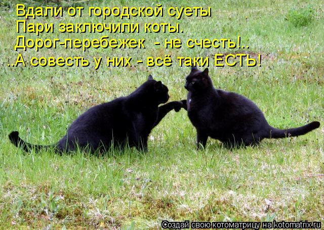 Котоматрица: Вдали от городской суеты Пари заключили коты. Дорог-перебежек  - не счесть!.. ..А совесть у них - всё таки ЕСТЬ!