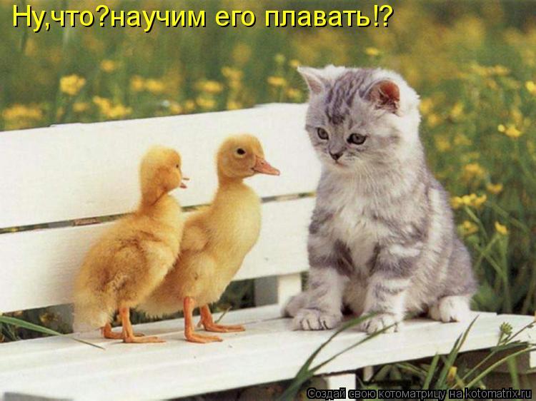 Котоматрица: Ну,что?научим его плавать!?