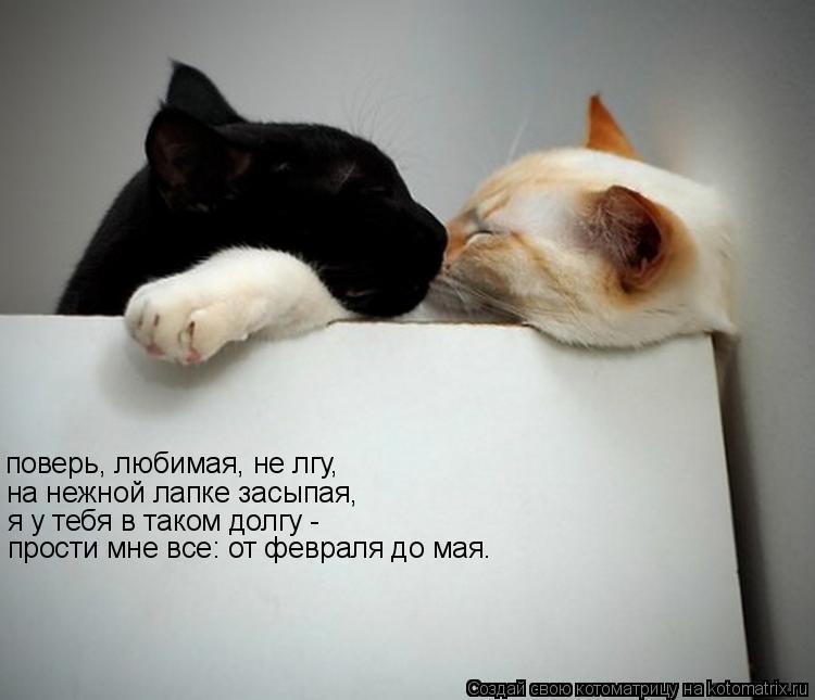 Котоматрица: на нежной лапке засыпая,  я у тебя в таком долгу -  прости мне все: от февраля до мая. поверь, любимая, не лгу,
