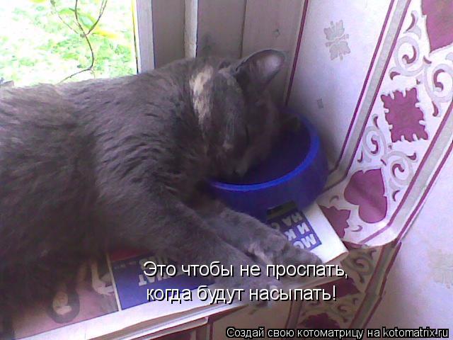Котоматрица - Это чтобы не проспать, когда будут насыпать!