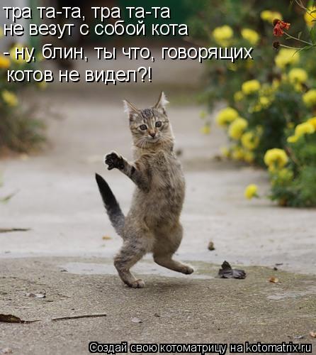Котоматрица: тра та-та, тра та-та не везут с собой кота - ну, блин, ты что, говорящих котов не видел?!