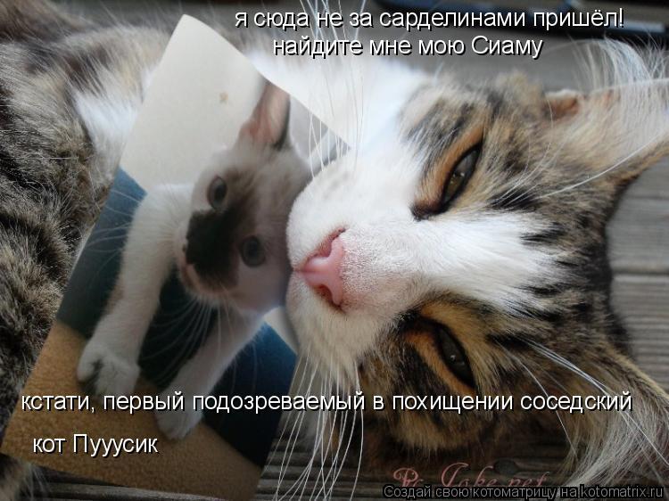 Котоматрица: я сюда не за сарделинами пришёл! найдите мне мою Сиаму кстати, первый подозреваемый в похищении соседский кот Пууусик