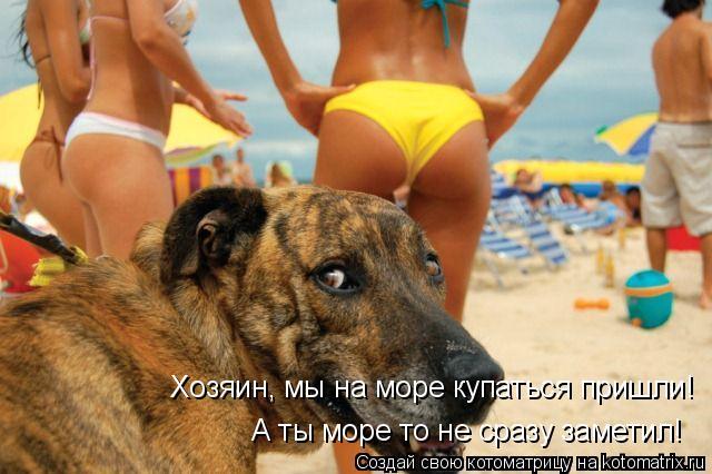 Котоматрица: Хозяин, мы на море купаться пришли! А ты море то не сразу заметил!