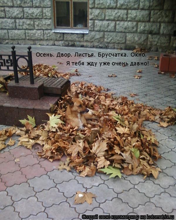 Котоматрица: Осень. Двор. Листья. Брусчатка. Окно. Я тебя жду уже очень давно!