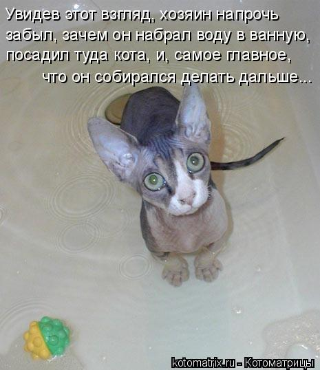 Котоматрица - забыл, зачем он набрал воду в ванную,  посадил туда кота, и, самое гла
