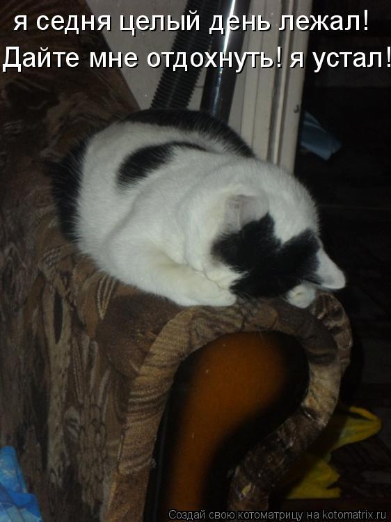 Котоматрица: я седня целый день лежал! Дайте мне отдохнуть! я устал!