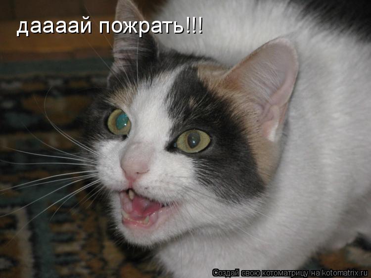 Котоматрица: даааай пожрать!!!